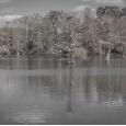 호수와 새들