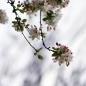 삼월의사진-봄이오는소리