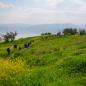 갈릴래아 호숫가의 봄 풍경